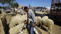 Mouton de l'Aid: baisse sensible des prix et amélioration de la