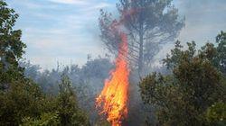 Le ministère de la Communication installe un fil rouge spécial incendies de forêts au niveau des radios