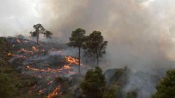 Plus de 14 000 hectares de forêts ravagés par les incendies depuis le 1e juin