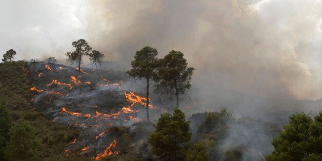 A forest fire burns in Bordj Bou Arreridj, 200km east of Algiers July 17, 2010 . The world is enduring...