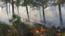 L'incendie de la forêt de Mediouna à Tanger circonscrit, près de 230 hectares