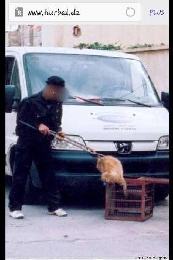 Chiens et chats en danger à