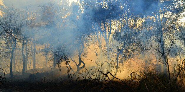 378 hectares de forêts parcourus par les incendies en 24h à l'échelle