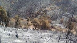 3906 hectares de couvert végétal détruits, une dizaine de wilayas rudement