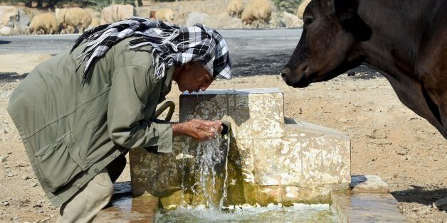 A Tunisian shepherd drinks water from a source as he herds his flock on August 21, 2016 in the village...