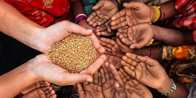 Volunteer caucasian woman giving grain to starving African children. Poor African children keeping their...