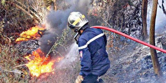 Feux de forêts: Plus de 1.000 ha touchés depuis début