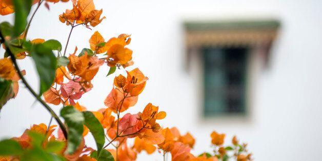 TUNIS, TUNISIA - OCTOBER 1: Flowers grow in the courtyard of Dar Ben-Gacem Hotel on October 1, 2016 in...