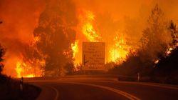 Les images du feu de forêt meurtrier au