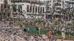 Casablanca veut réduire de moitié les pigeons de la place Mohammed