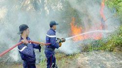 Feux d'été : les incendies ravagent des forêts, des champs de blé et des arbres fruitiers dans six
