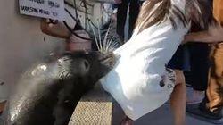Un lion de mer a donné une grosse frayeur à cette