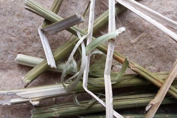 Adrar Nouh: La coopérative qui veut fabriquer des briques en cannabis dans le Rif