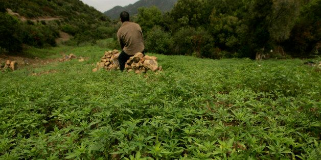 Un agriculteur dans un champ de cannabis près de