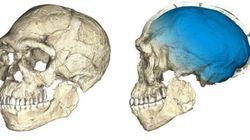 Les premiers Homo sapiens sont bien plus vieux qu'on ne le pensait (et vivaient au
