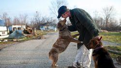 Le nez de l'homme rivalise avec celui du chien (surtout quand il est question de