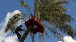 Tunisie: Augmentation des recettes des exportations des