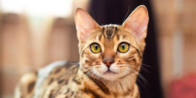 L'alerte sur les chats porteurs de la rage en provenance du Maroc a été