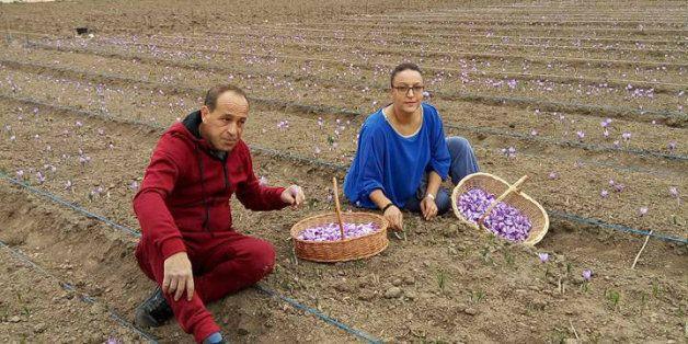 Louisa et Mustapha, le couple qui sème sur son passage