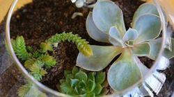 Comment réaliser son terrarium et créer un jardin