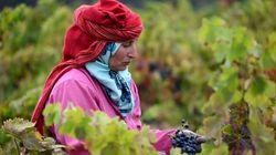 Tunisie: La contribution des plantes médicinales et aromatiques à la production agricole ne dépasse pas
