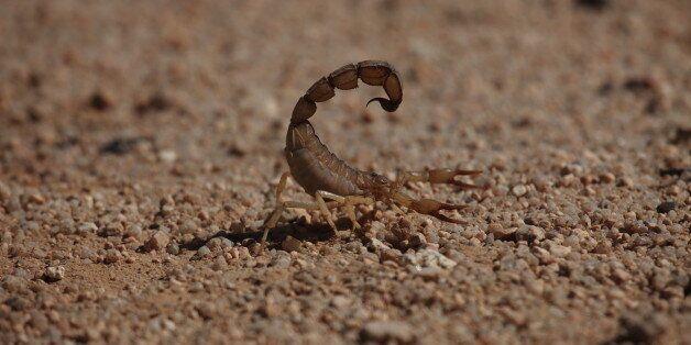 Gelber Sahara