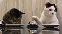 Cette vidéo de chats à la fois mignons et angoissants fait le