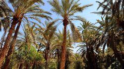 Le Parc national de Dghoumès classé 2eme mondial par une organisation britannique pour sa biodiversité