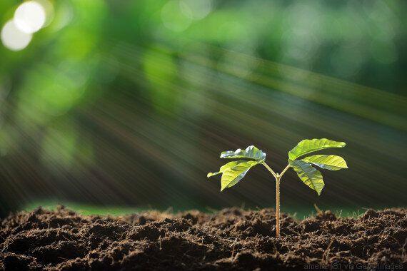 Les arbres ont une vie secrète que nous n'imaginons