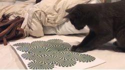 Ce chat devient complètement dingue devant une illusion