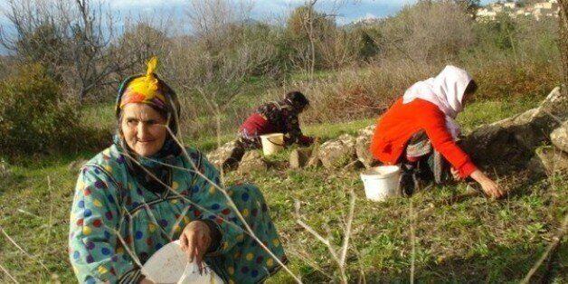 L'olivier en fête à Tizi Ouzou à partir du 21