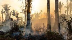 30.901 φωτιές στο τροπικό δάσος του Αμαζονίου τον