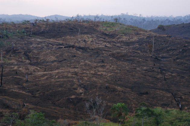 インドネシア・カリマンタン島の荒廃した森林=2004年撮影