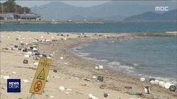 하루 아침에 쓰레기장이 된 이 바닷가에 감춰진 어이없는