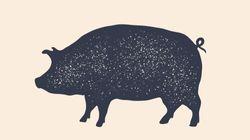 """국정원 """"북한 전역에 아프리카돼지열병 확산…평안북도 돼지"""