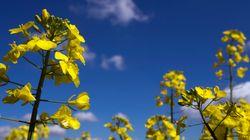 Lancement d'une huile végétale à base de Colza 100%