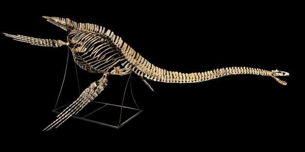 Le Maroc obtient l'annulation de la vente aux enchères d'un fossile vieux de 66 millions