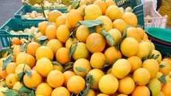 Tunisie: Mise en place d'un programme pour une meilleure commercialisation des agrumes à