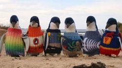 Le plus vieil homme d'Australie tricote des chandails pour sauver des manchots