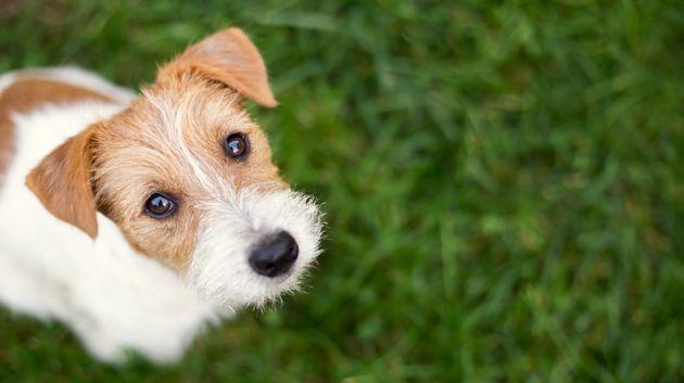 Δηλητηρίασαν σκύλους δίπλα από παιδική χαρά στην