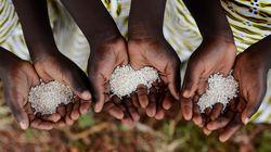 Colgate, Nestlé et Unilever accusés d'utiliser de l'huile de palme produite par des enfants