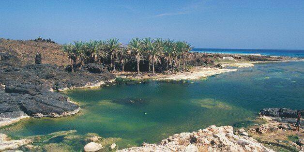 YEMEN - FEBRUARY 9: Palm trees on rocky cove along the Arabian Sea coast, near Hadibu, Socotra island,...