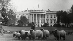 Thomas Jefferson, une affaire de mouton