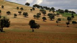 Domaines de l'Etat: 200 dépassements signalés, 8000 hectares