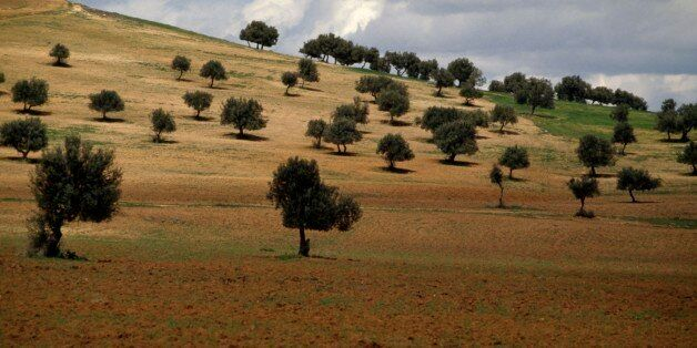 TUNISIA - MARCH 18: Agricultural landscape with olive grove and cloudy sky, Tunisia. (Photo by DeAgostini/Getty