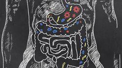 Des chercheurs ont réussi à recréer une partie d'intestin