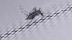 Le Zika n'est plus une