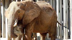Entre 1970 et 2012, la Terre a perdu plus de la moitié de ses animaux
