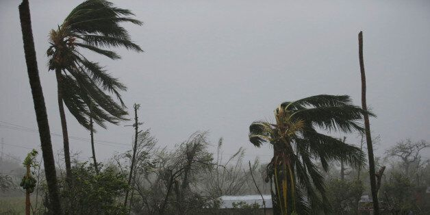 Trees damaged by wind are seen during Hurricane Matthew in Les Cayes, Haiti, October 4, 2016. REUTERS/Andres...