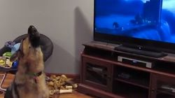 La réaction de ces chiens devant des chiens qui regardent des chiens qui regardent
